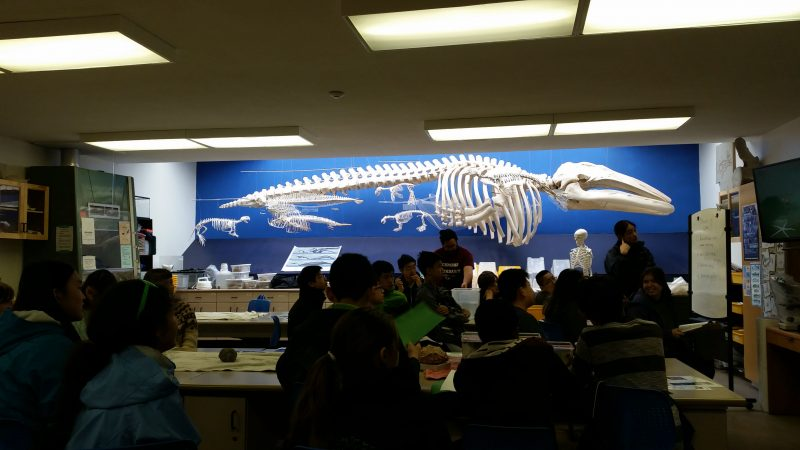 The Whale Lab